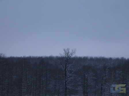Тамбовский лес